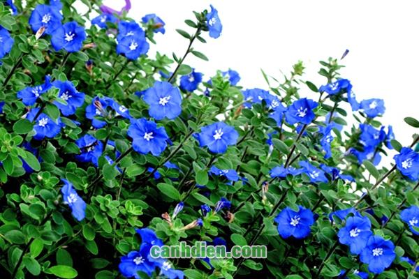 Các Loại Hoa Dễ Trồng Sống Lâu Nên Có Trong Vườn Của Bạn