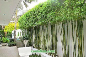 Các loại cây trồng hàng rào giúp trang trí đem lại sự riêng tư