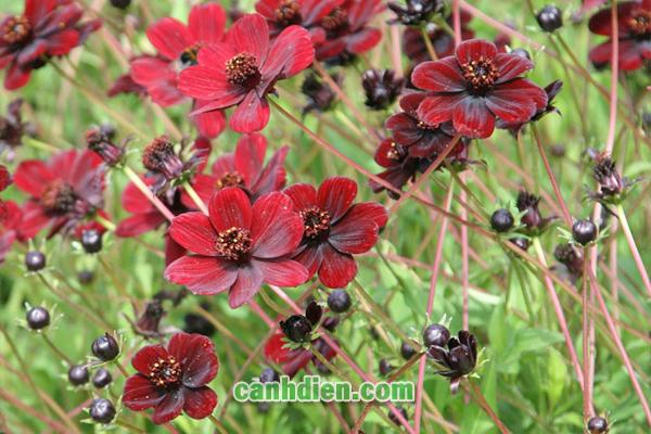 Những Loài Hoa Có Mùi Thơm Dễ Chịu Được Nhiều Người Yêu Thích