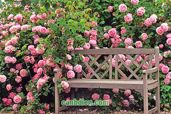 Các Loại Hoa Đẹp Nở Quanh Năm Tỏa Hương Trong Vườn Của Bạn