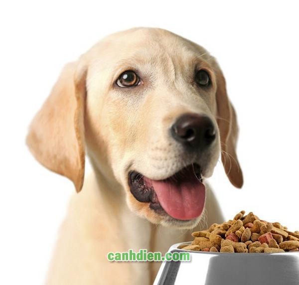 Cách Làm Thức Ăn Cho Chó