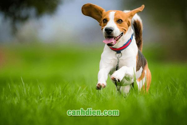 Chó Bị Bệnh Đường Ruột Phải Làm Sao