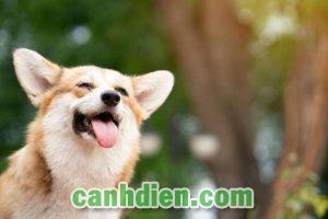 Đặt Tên Cho Chó Hay Và Ý Nghĩa