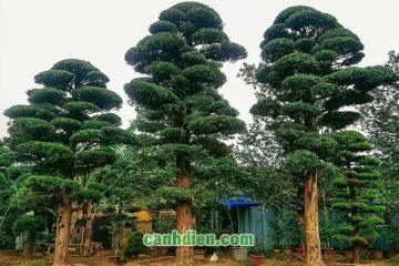 [Phong thủy] Những loại cây có thể trừ tà nên trồng quanh nhà