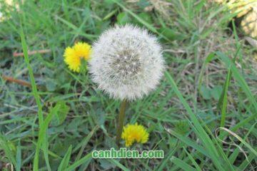 Những loài hoa mang ý nghĩa buồn chưa được biết đến