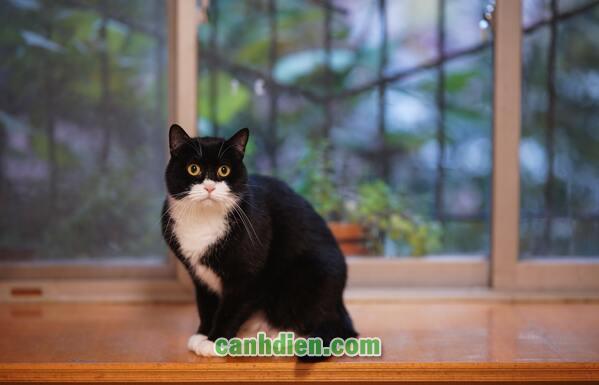 Thuốc Xua Đuổi Chó Mèo Chống Phóng Uế Bừa Bãi