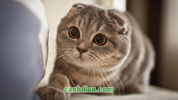 Vòng Cổ Chống Rận Cho Mèo